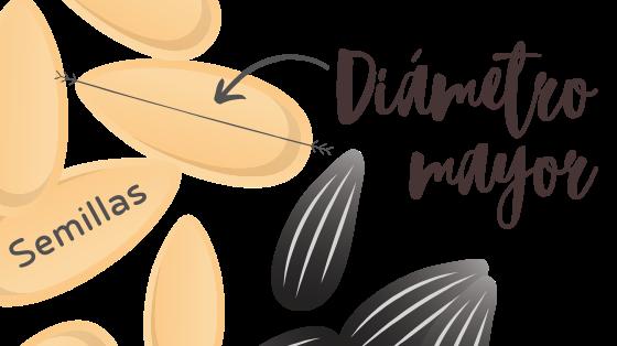 diámetro semilla