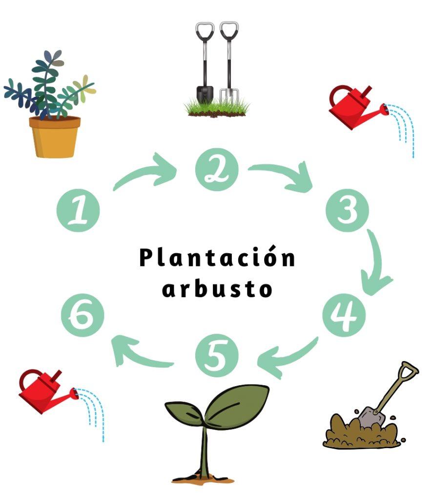 plantación arbusto